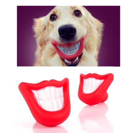 Pets DOG dogs funny one right for toys