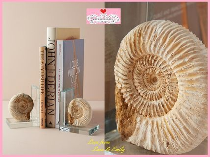 17SS☆最安値保証&関税送料込【Anthro】Fossil Form Bookends