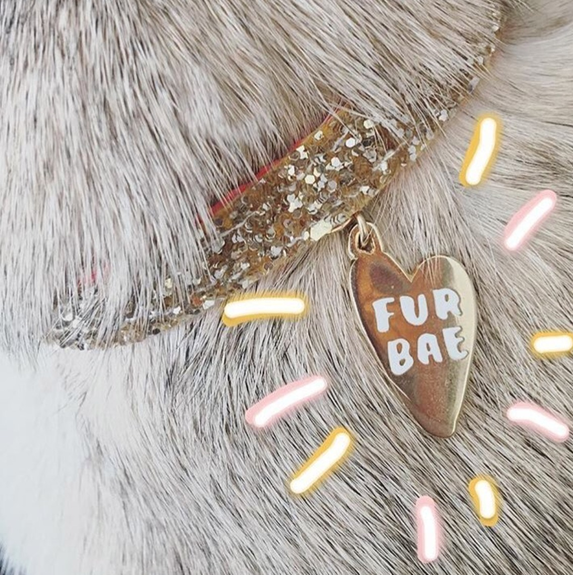 ☆☆☆ helloharriet ☆☆☆ 'Fur Bae' Collar Tag