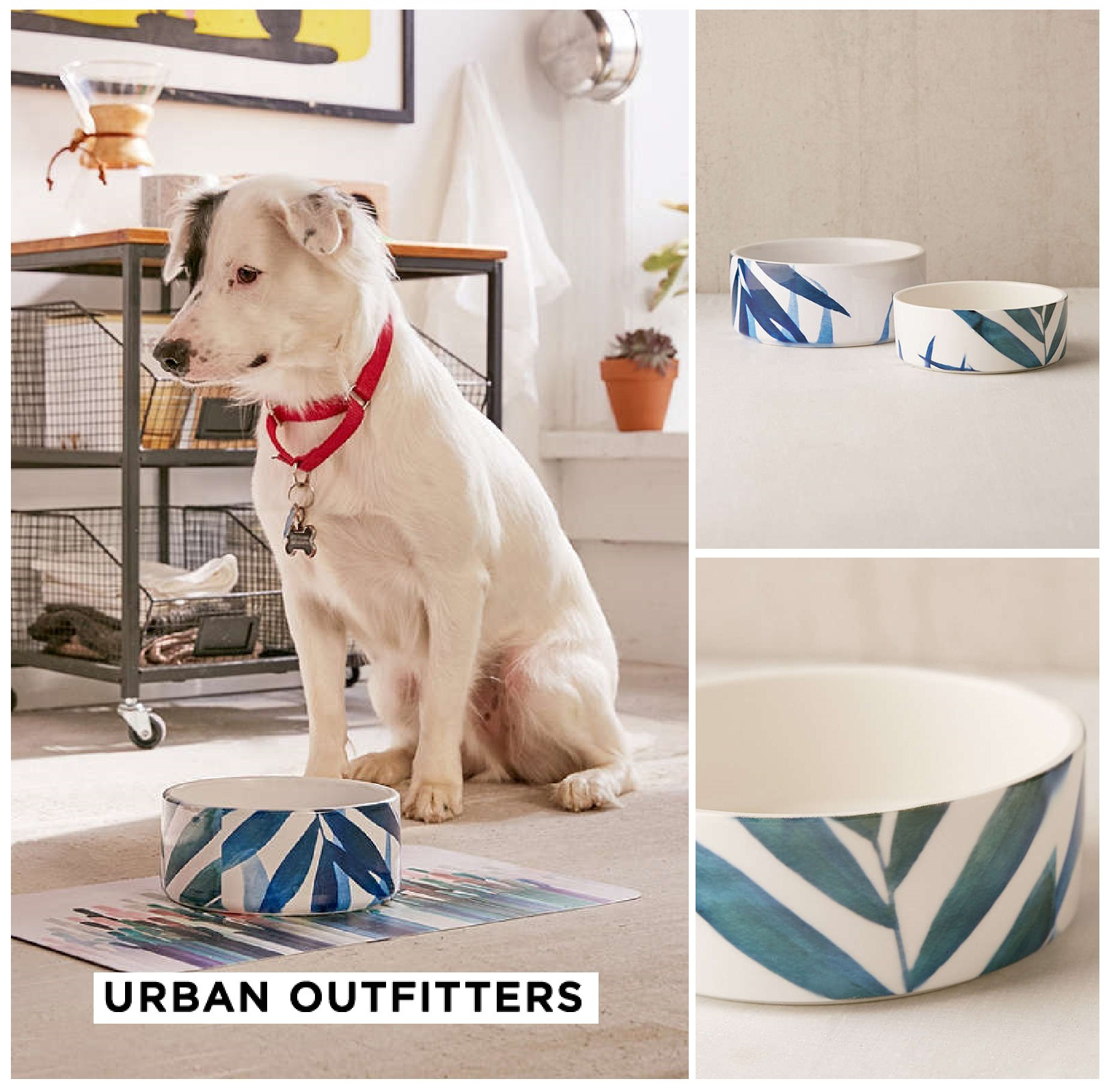 Urban Outfitters☆Emanuela Carratoni SweetTropicana PetBowl