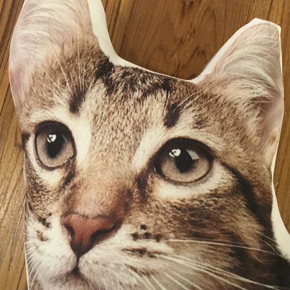 (クッション)Cushion Pussy Cat A/American Wirehair