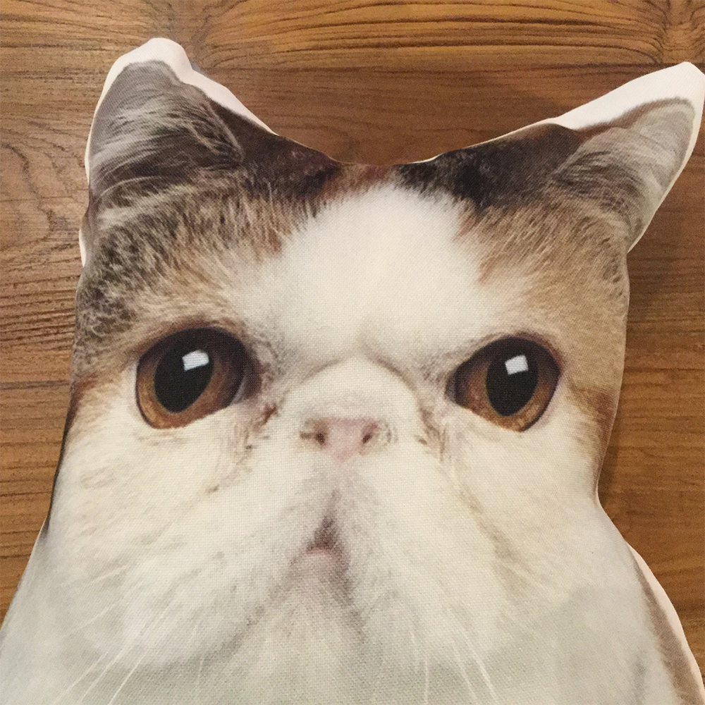 (クッション)Cushion Pussy Cat A/Exotic Shorthair
