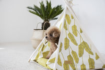 TEEPEE TENT Palm Olive (S size)