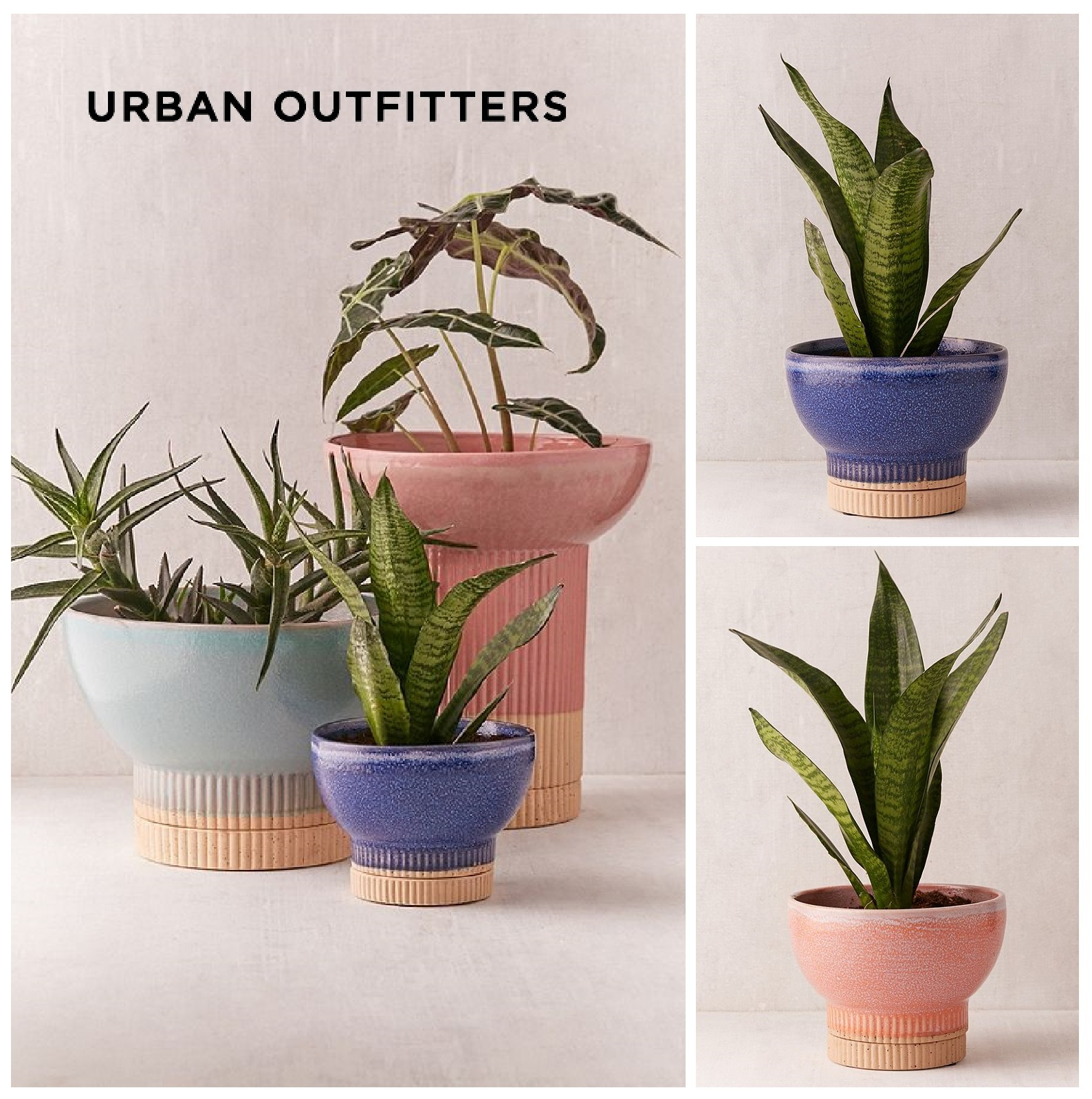 ☆Urban Outfitters Soren Small Planter☆ 税送込