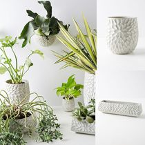 日本未入荷!!【Anthropologie】Chrysanthemum Pot♪MEDIUM