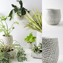日本未入荷!!【Anthropologie】Chrysanthemum Pot♪Large Pot