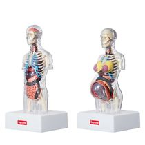 [国内即発] SUPREME Male Female Anatomy Model 即納