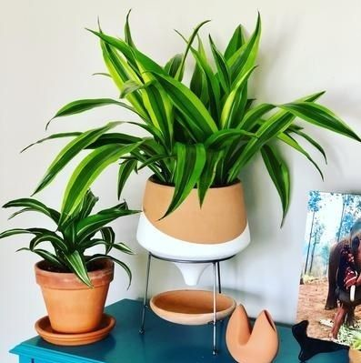 Anthropologie 花瓶・植木鉢 関税・送料込み☆Dipped Clay Pot + Stand(9)